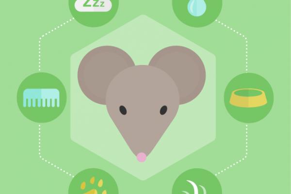 MazeEngineers_Modules_MouseBehavior