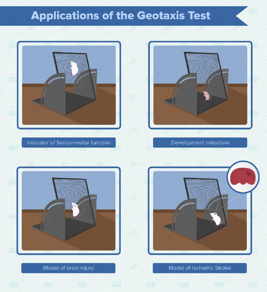 Geotaxis test