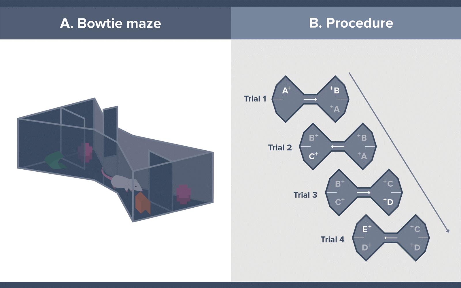 Bowtie Mazes procedure figure
