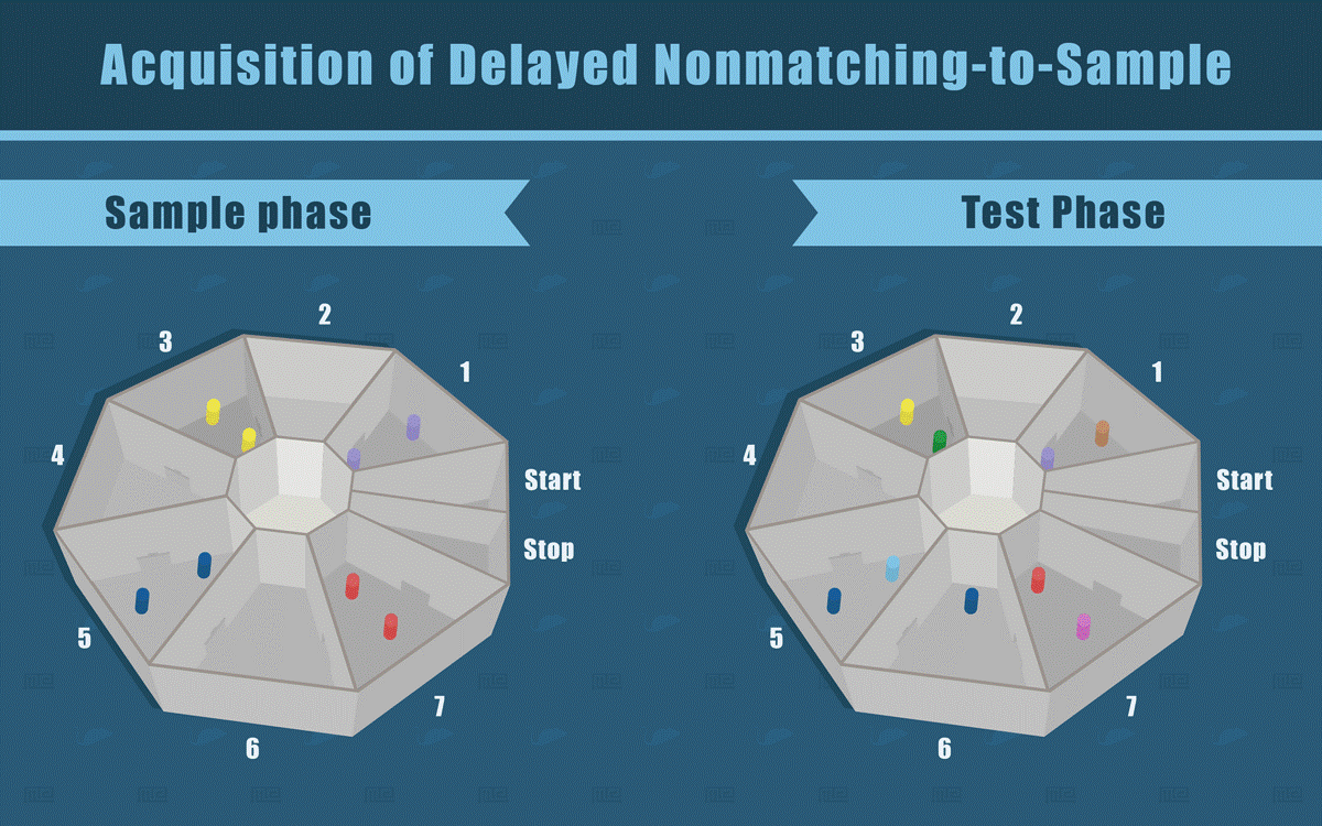 Acquisition of Delayed Nonmatching-to-Sample of Novel Object Recognition Assay