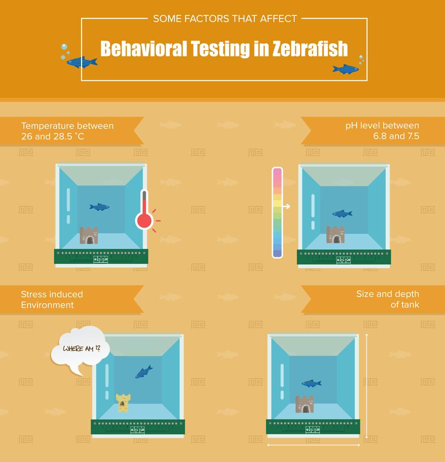 Zebrafish behavior testing