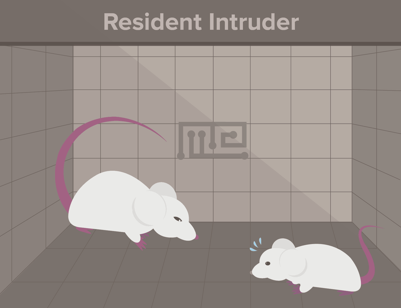 resident intrusion-social hierarchy in animals