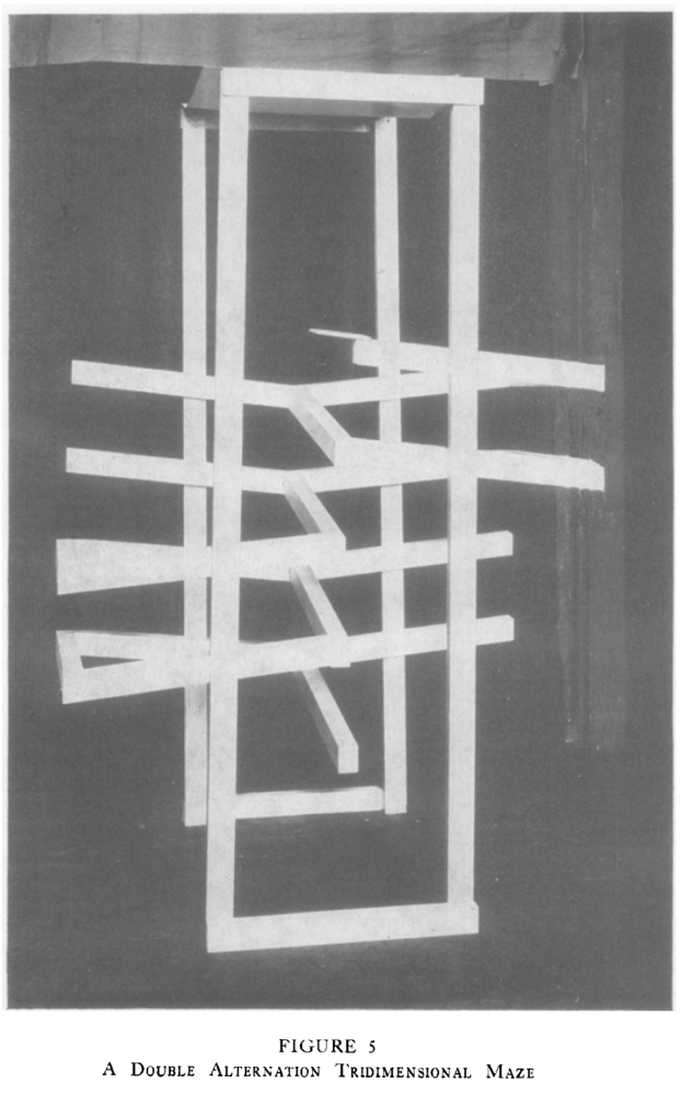 history of behavioral testing with maze- hunter's double alternation tridimensional maze