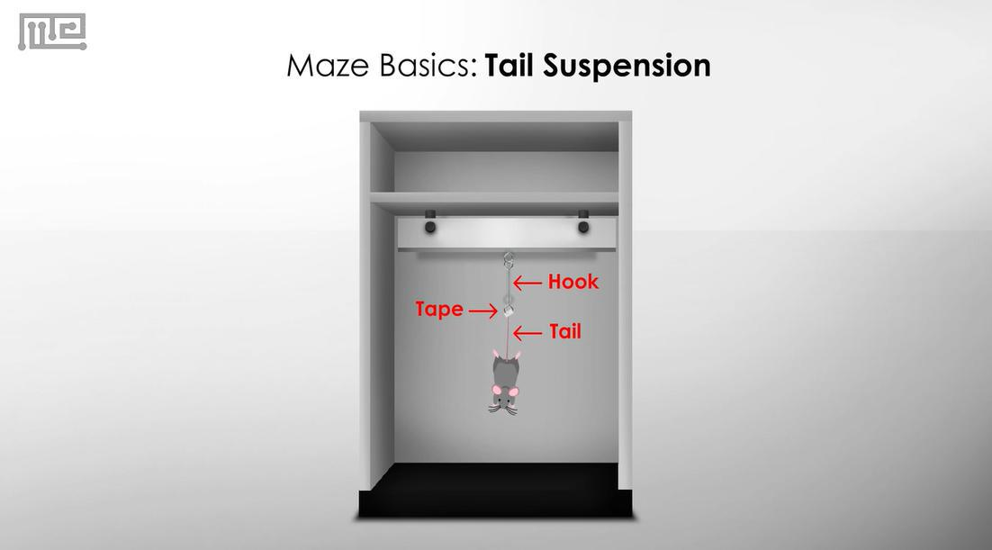 tail suspension test mouse