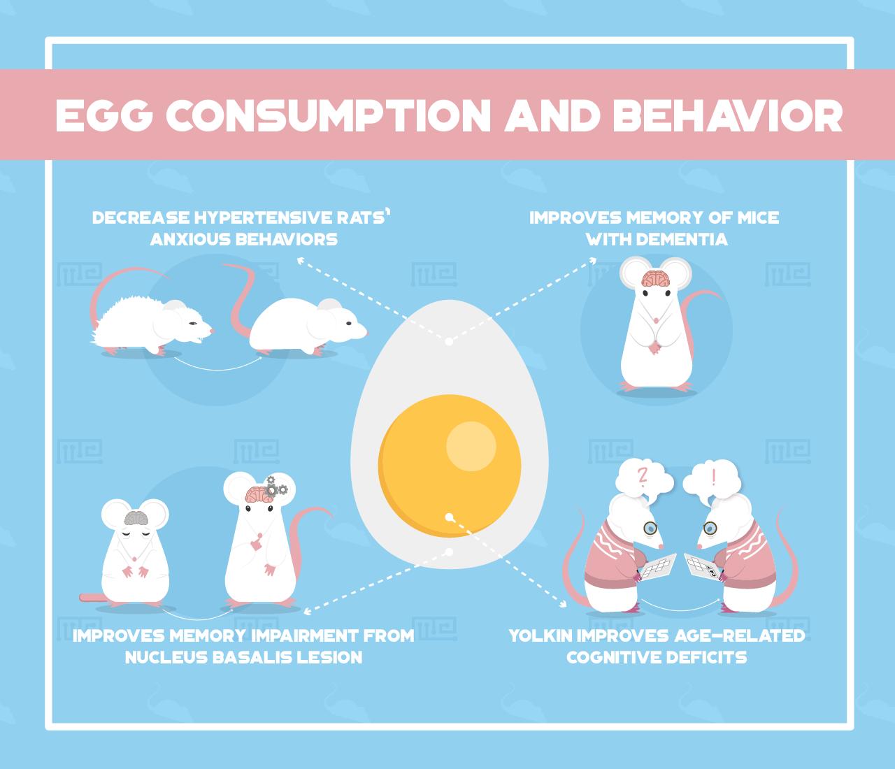 Egg-Consumption-and-Behavior