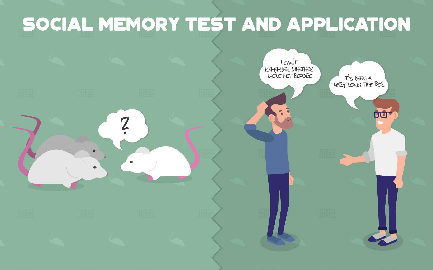 social interaction test - memory test