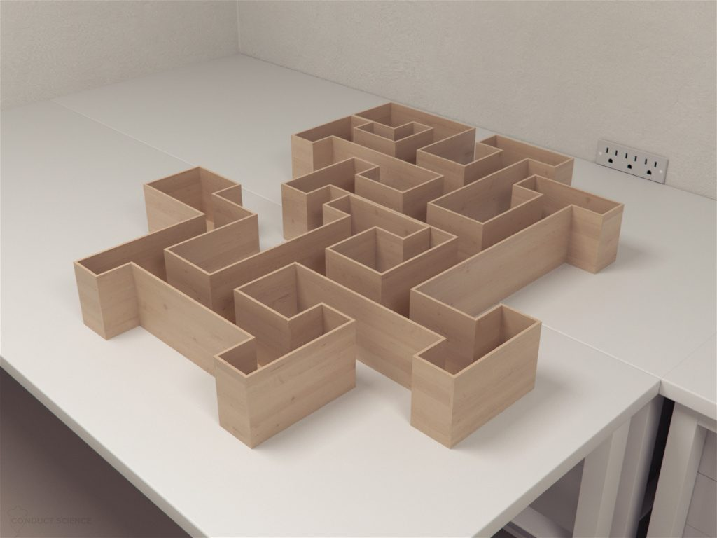 Cincinnati Water Maze (CWM) is a labyrinthine maze used to study egocentric navigation, learning, and memory