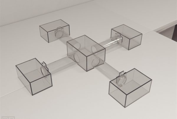Bat Extended Maze is a crawling maze to test cognition within multiple species of genus Myotis