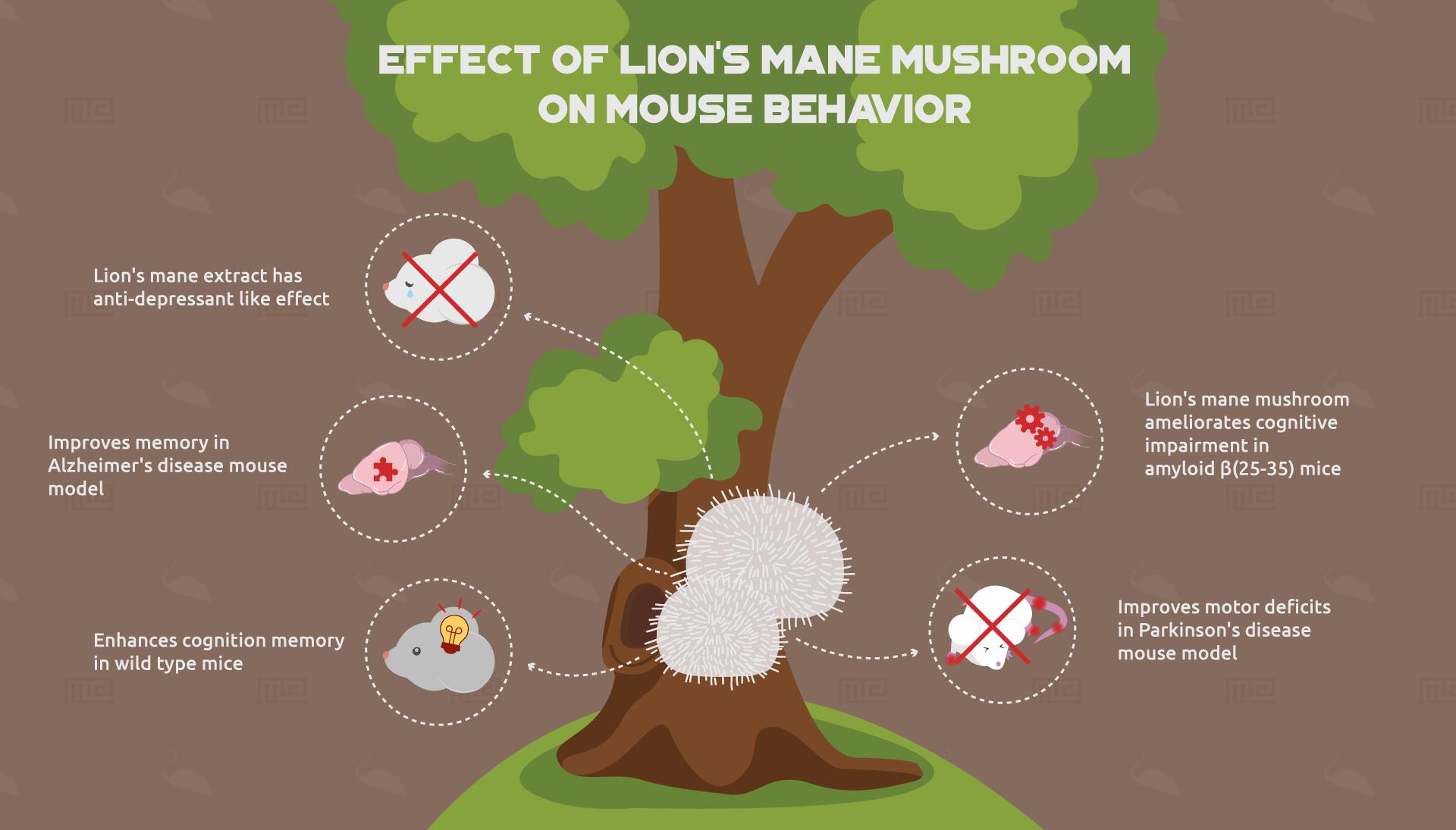 Effect-of-Lion's-mane-mushroom-on-mouse-behavior-2