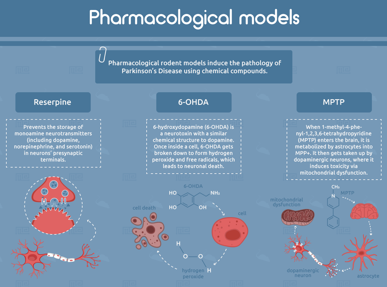 pharmacological models of parkinsons disease