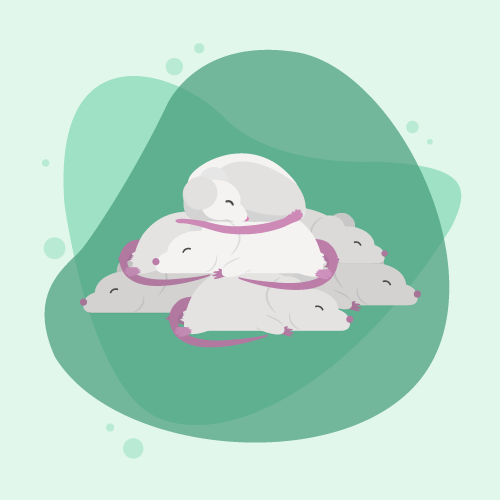 mouse ethogram group sleeping behaviors