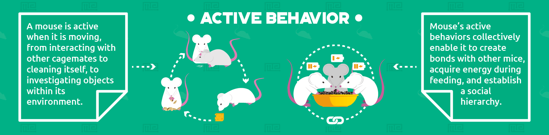 active behaviors infographic