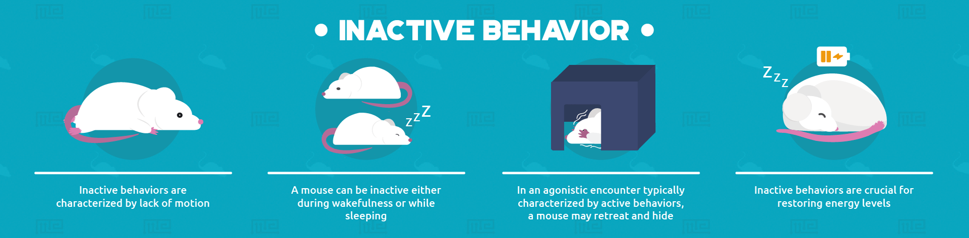 inactive behaviors infographic