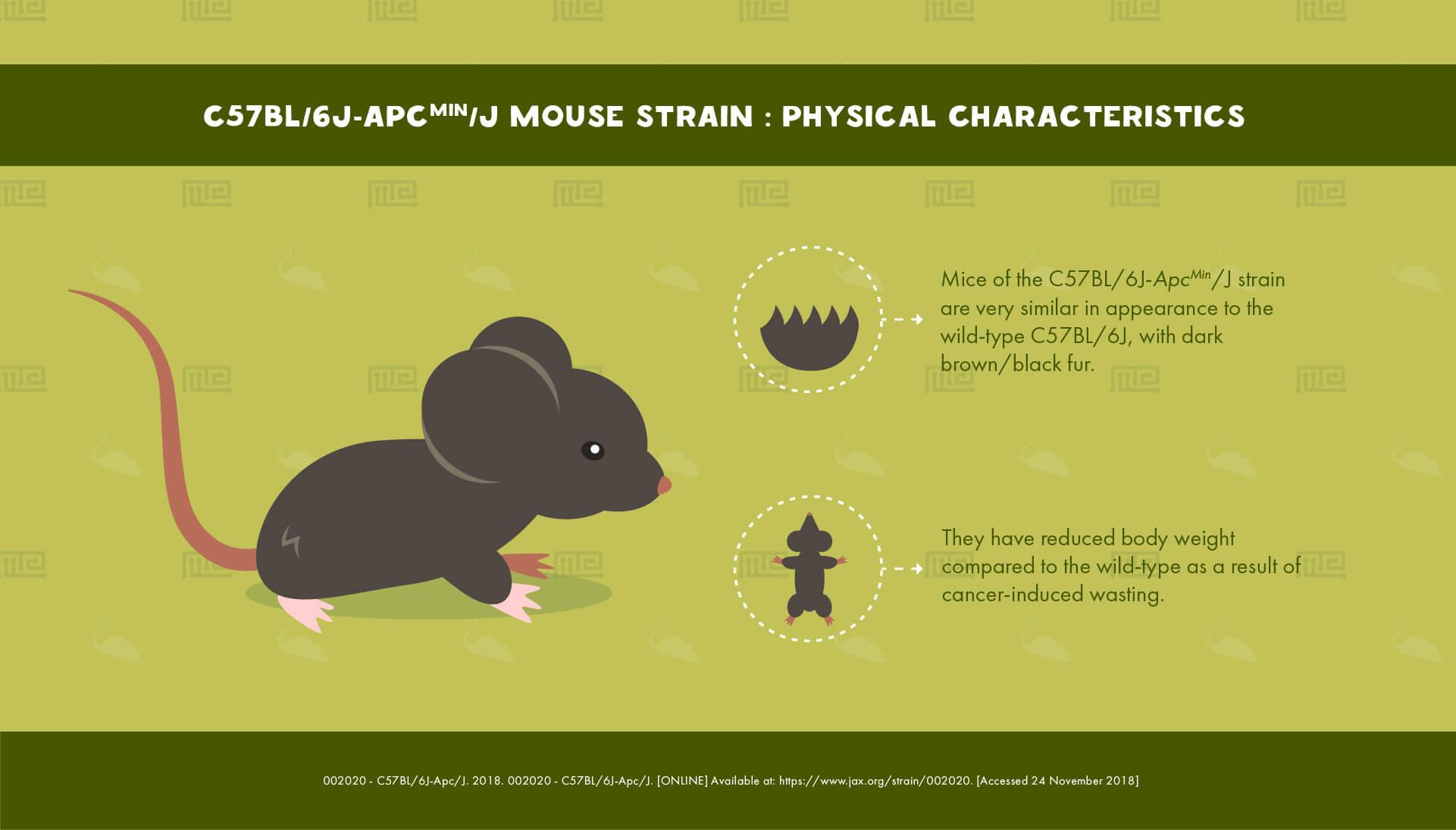 C57BL/6JApcMin/J Mouse Strain - Physical Characteristics