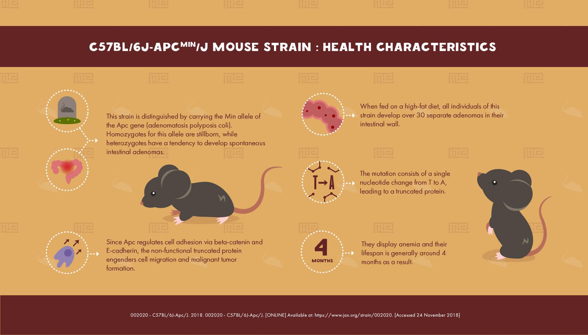C57BL/6JApcMin/J Mouse Strain - health Characteristics