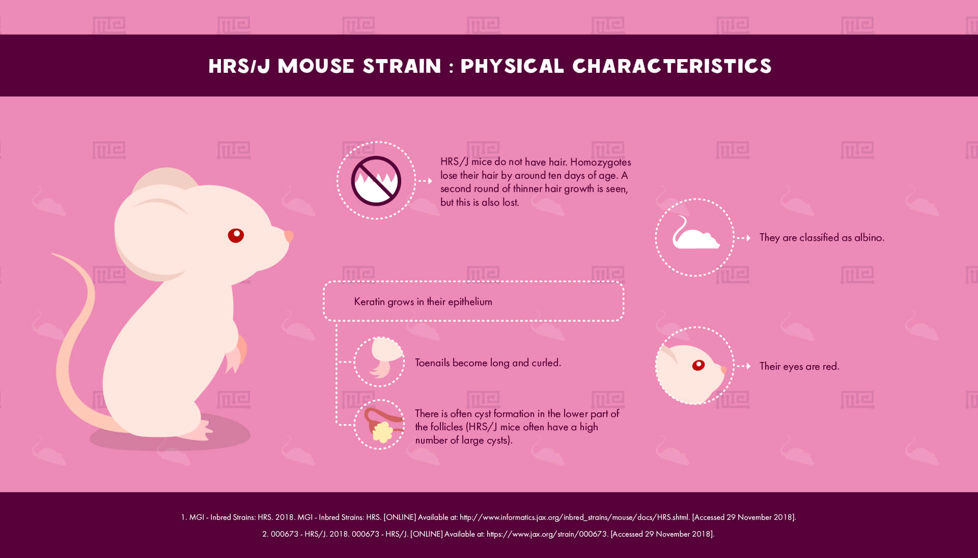 HRS/J Mouse Strain - Physical Characteristics