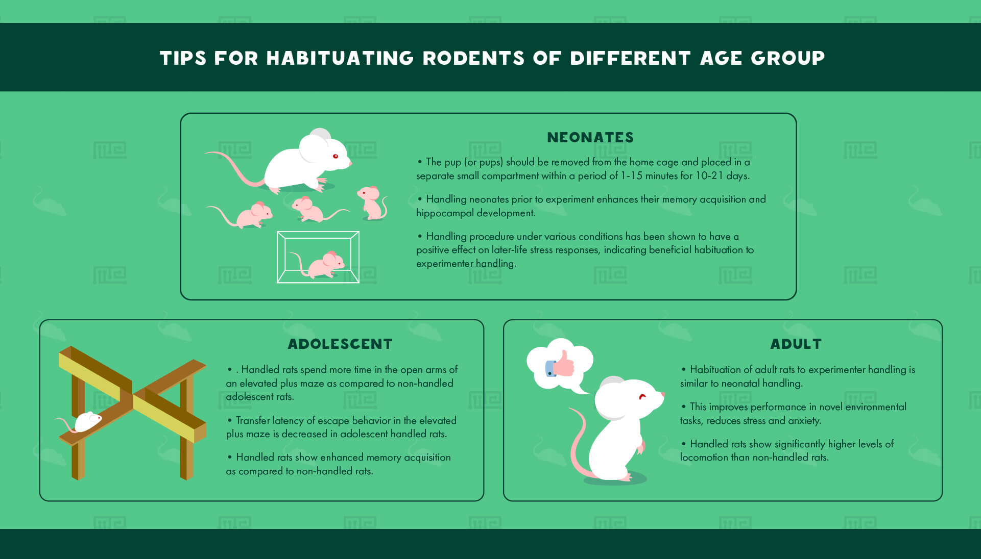 habituating rodents of different age group