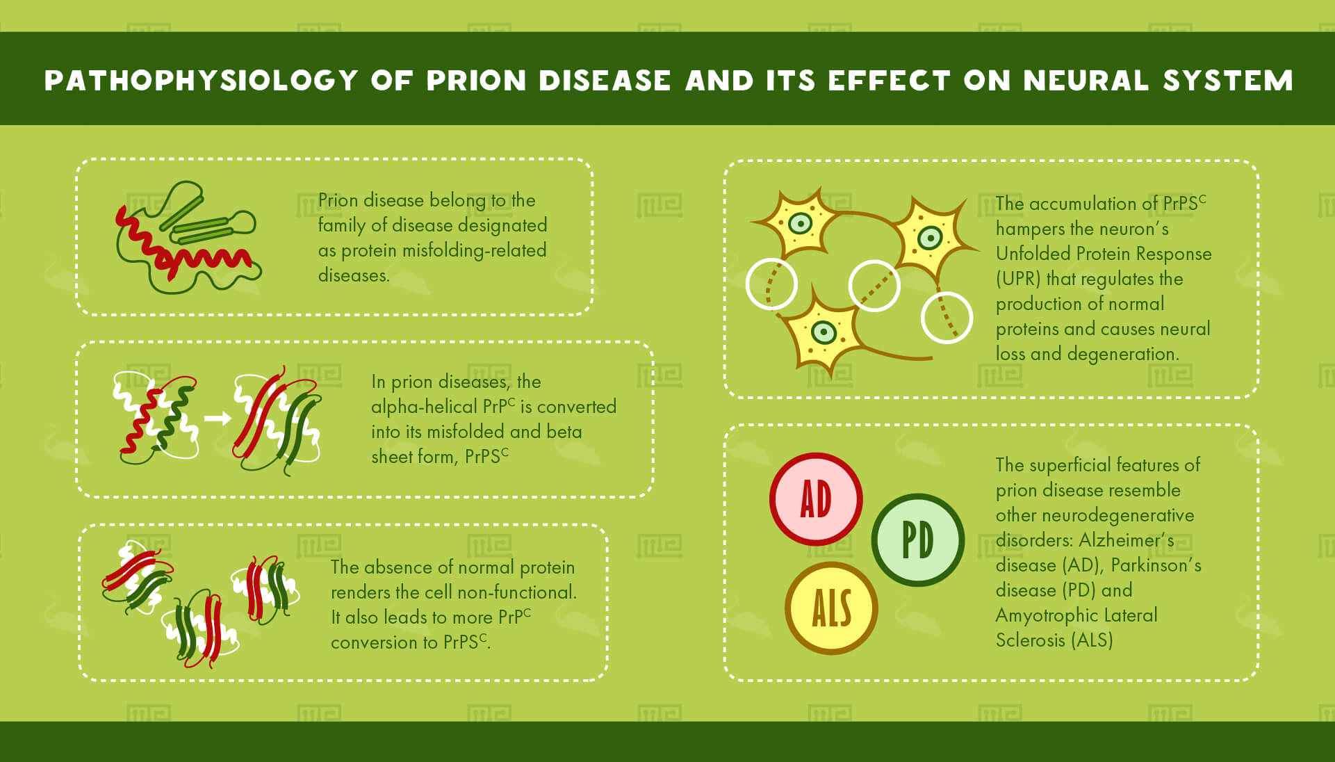 Pathophysiology of Prion Disease and its effect on neural system