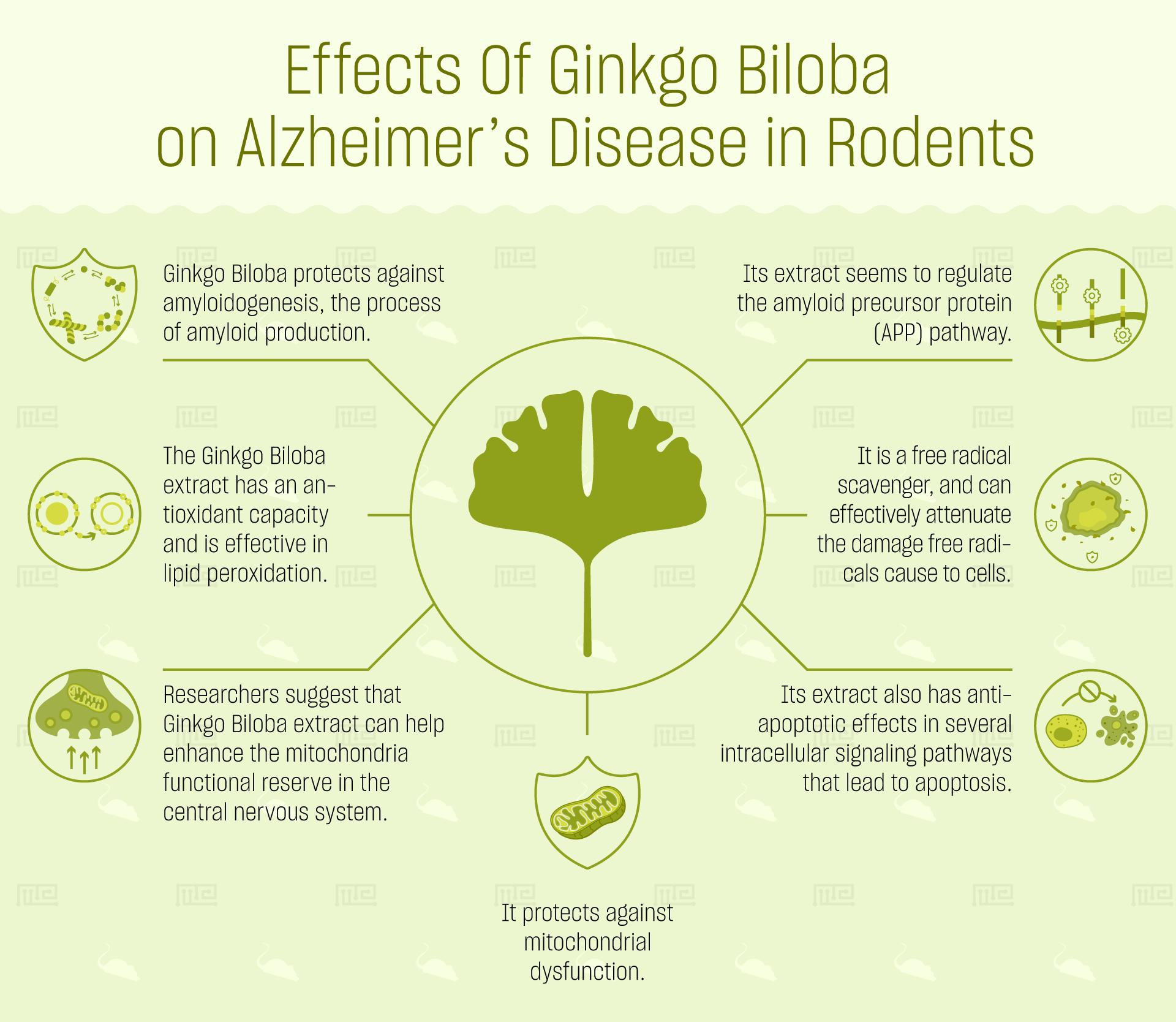 effects of ginkgo biloba on behavior