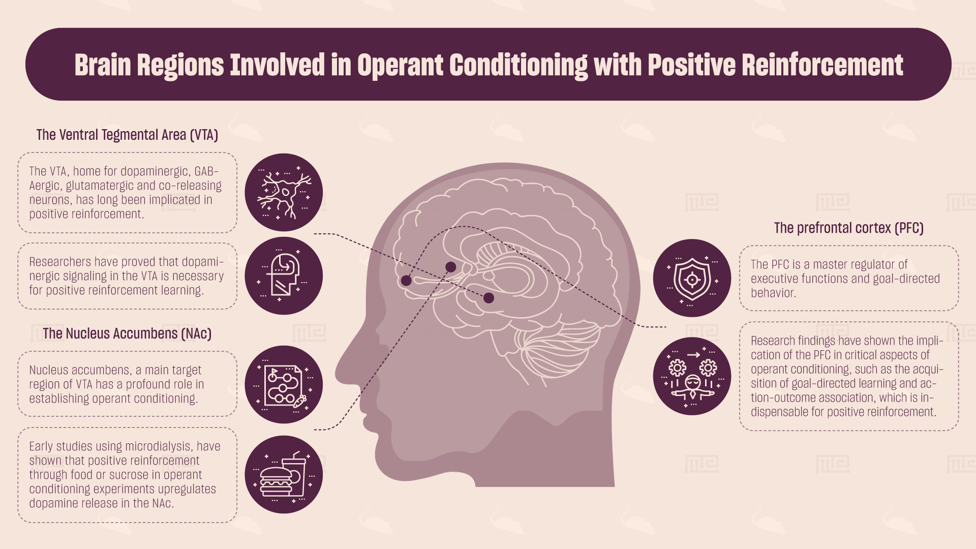 brain regions involved in operant conditioning with positive reinforcement