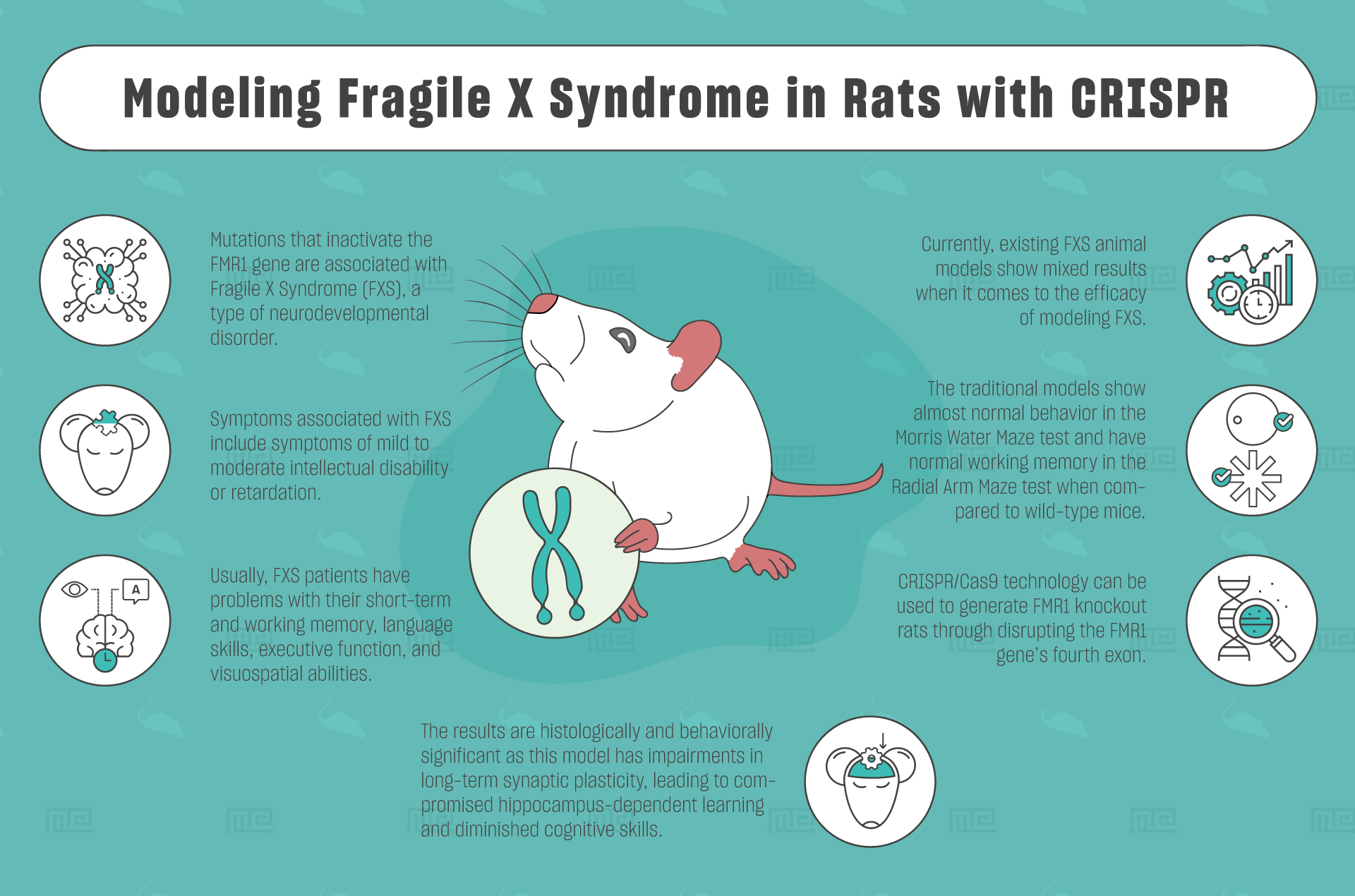 Modeling Fragile X Syndrome in Rats with CRISPR