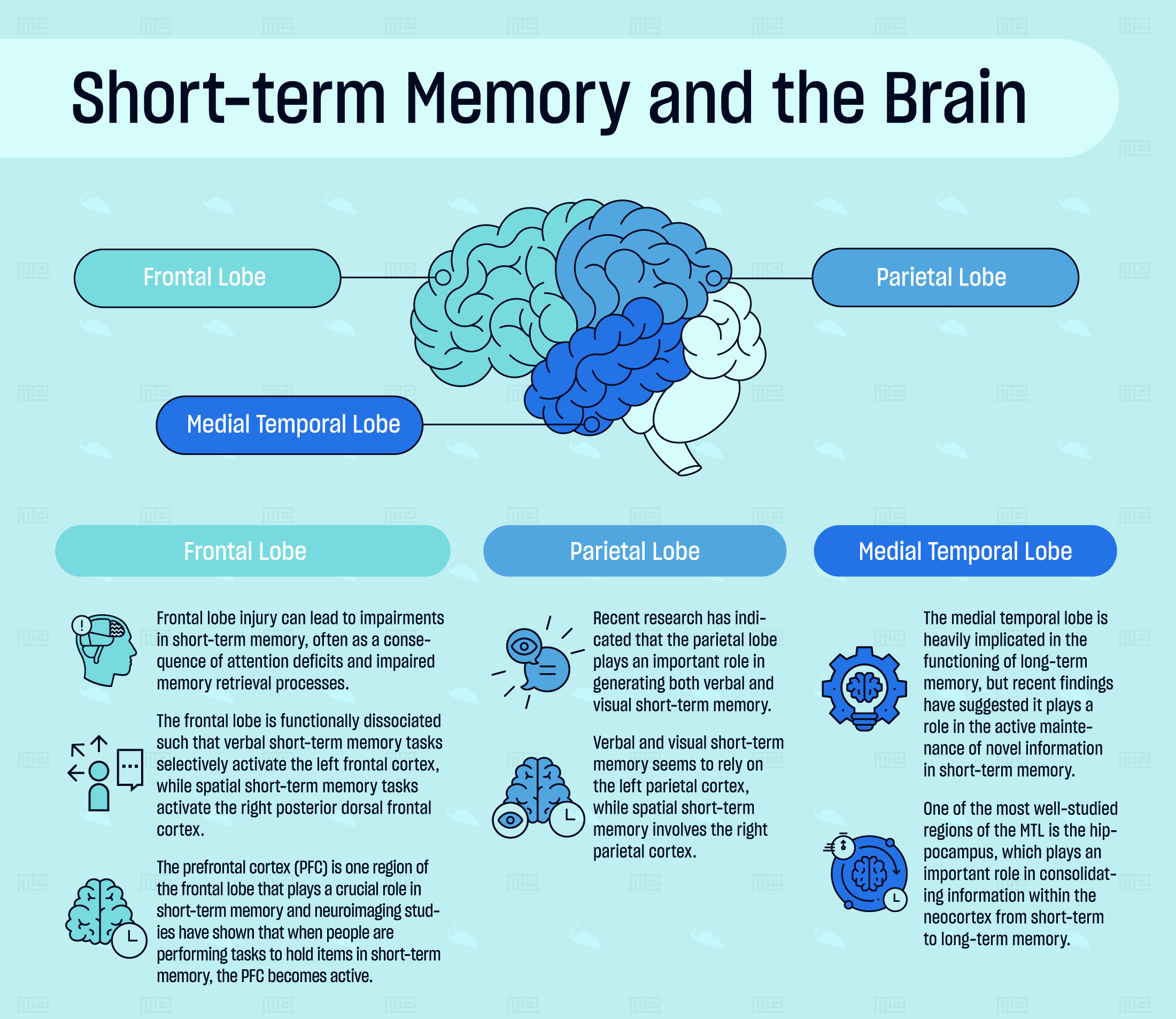 Brain structures involved in short term memory