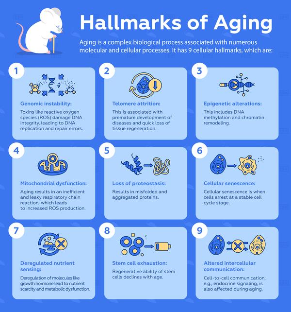 9 cellular hallmarks of aging