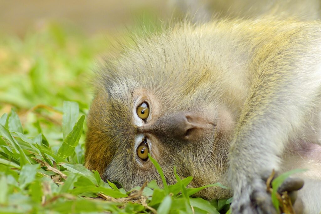Monkey resting on the floor - News article featured image