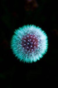 Hendra and Nipah Viruses